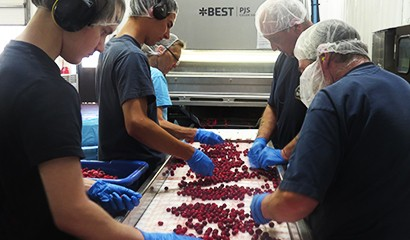Makers - Berries Factory